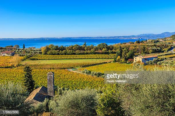 vineyards in autumn, lake garda, italy - veneto stock pictures, royalty-free photos & images