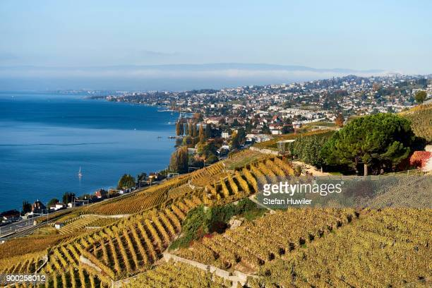 vineyards in autumn, lausanne at back, lavaux, lake geneva, canton of vaud, switzerland - vaud canton stock photos and pictures
