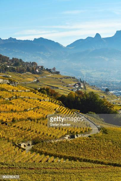 Vineyards in autumn, Lavaux, Canton of Vaud, Switzerland