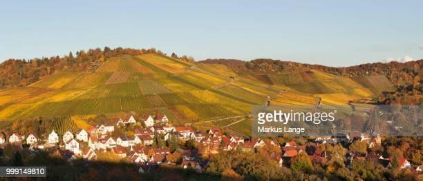 Vineyards in autumn, near Uhlbach, Stuttgart, Baden-Wuerttemberg, Germany
