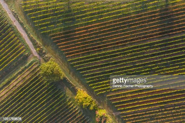 vineyards in autumn - fila arranjo imagens e fotografias de stock