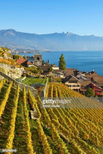 vineyards in autumn, view of lake geneva and winegrowing village saint-saphorin, lavaux, canton of vaud, switzerland - vaud canton stock photos and pictures