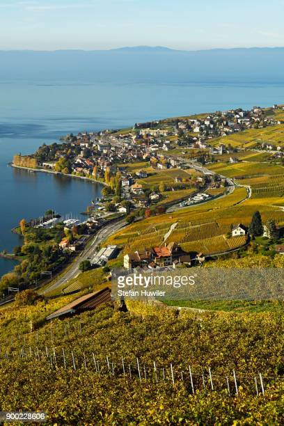 Vineyards in autumn with a view of the wine-producing Cully village, Lavaux, Canton of Vaud, Switzerland