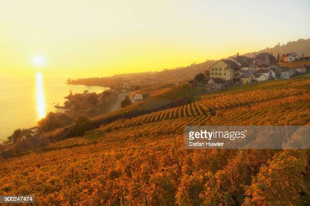 Vineyards in autumn with view of vineyard village Epesses, sunset, Lavaux, Canton of Vaud, Switzerland