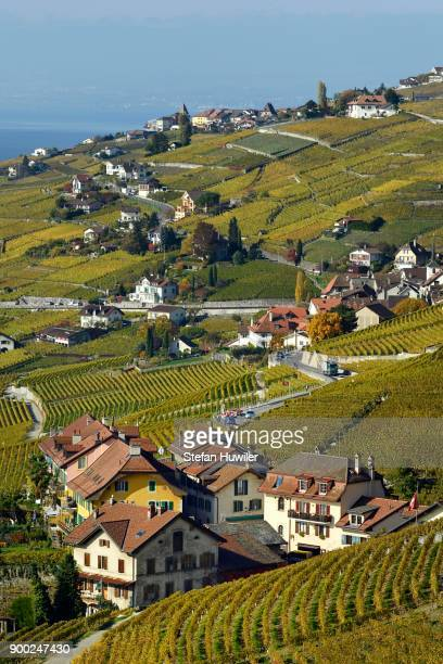 Vineyards in autumn with view of winemaking villages Epesses and Riex, Lavaux, Canton of Vaud, Switzerland