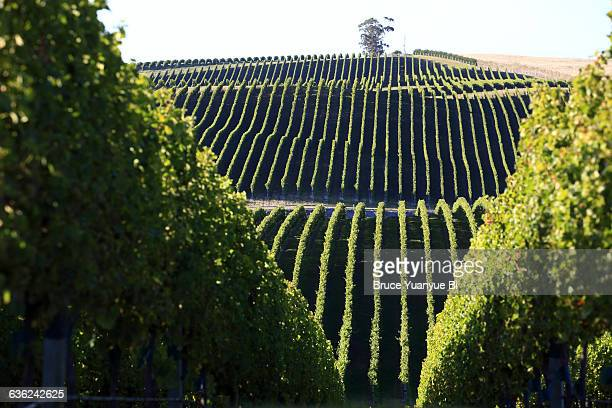 Vineyards in Awatere Valley