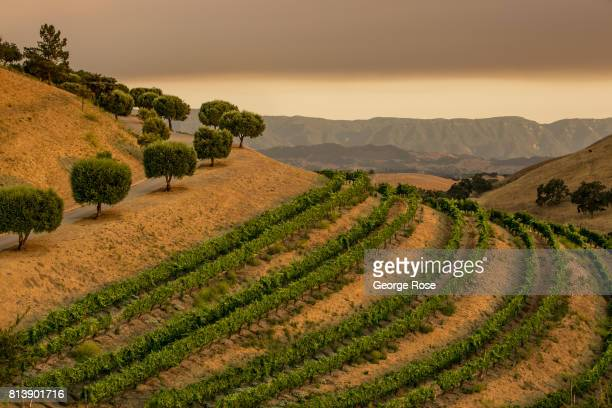 Vineyards in Ballard Canyon are viewed near sunset with heavy smoke from nearby fires on July 9 near Los Olivos, California. Because of its close...