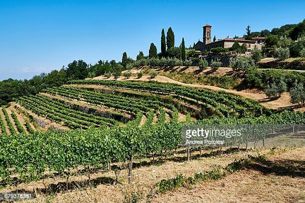 vineyards in chianti, tuscany, italy - chianti region stock photos and pictures