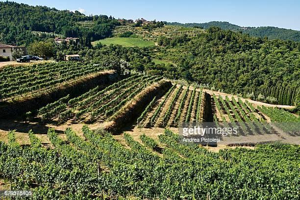 Vineyards in Chianti, Tuscany, Italy