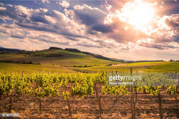 vineyards in chianti, tuscany - chianti region stock photos and pictures