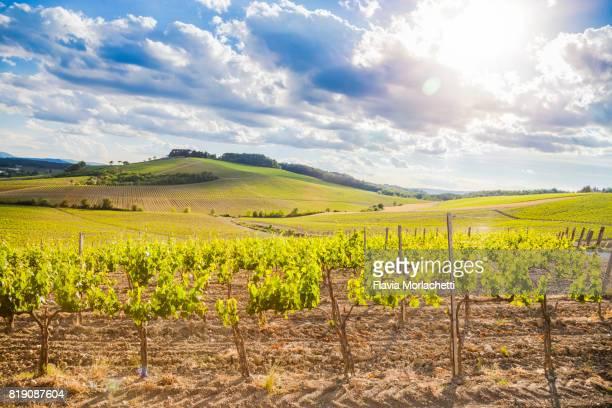 Vineyards in Chianti, Tuscany