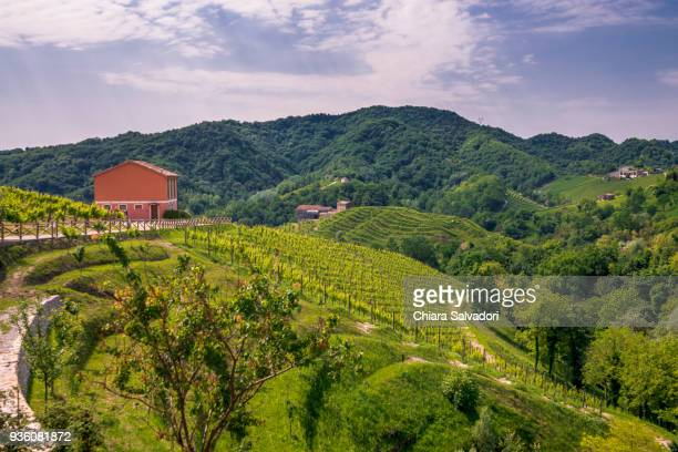 vineyards in conegliano-valdobbiadene - prosecco stock pictures, royalty-free photos & images