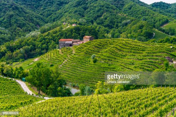 vineyards in conegliano-valdobbiadene - veneto stock pictures, royalty-free photos & images