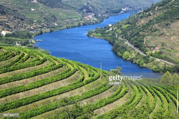 Vinhas no Vale do Douro