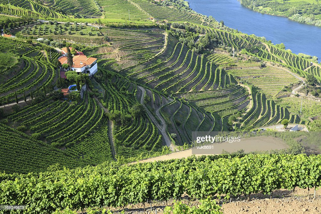 Vineyards in Douro Valley : Stock Photo