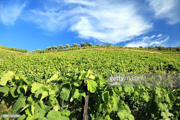 vineyards in douro valley - douro valley stock photos and pictures