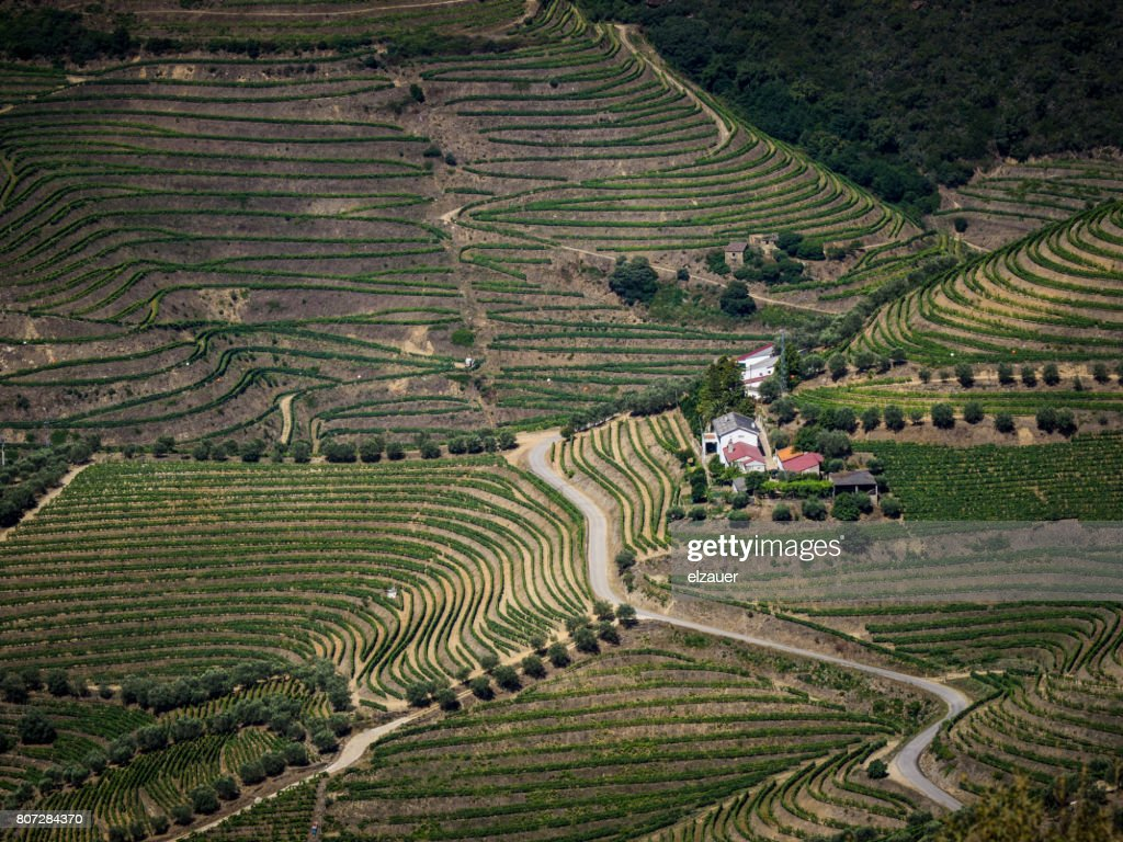 Vineyards in Douro Valley, Portugal : Stock Photo