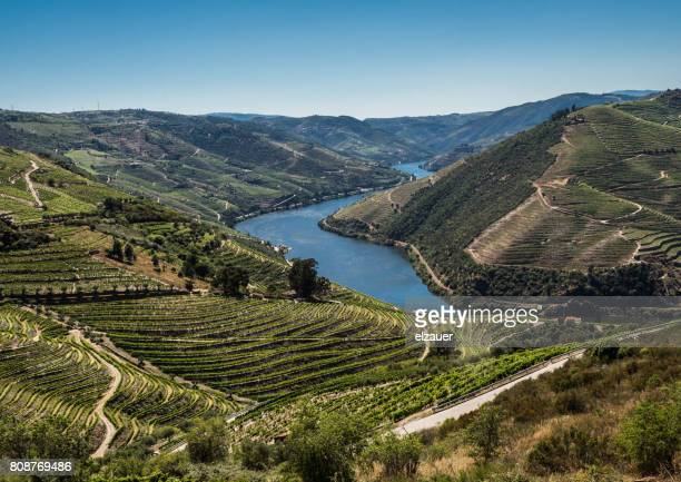 vineyards in douro valley, portugal - douro valley stock photos and pictures