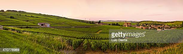 vineyards in fuisse