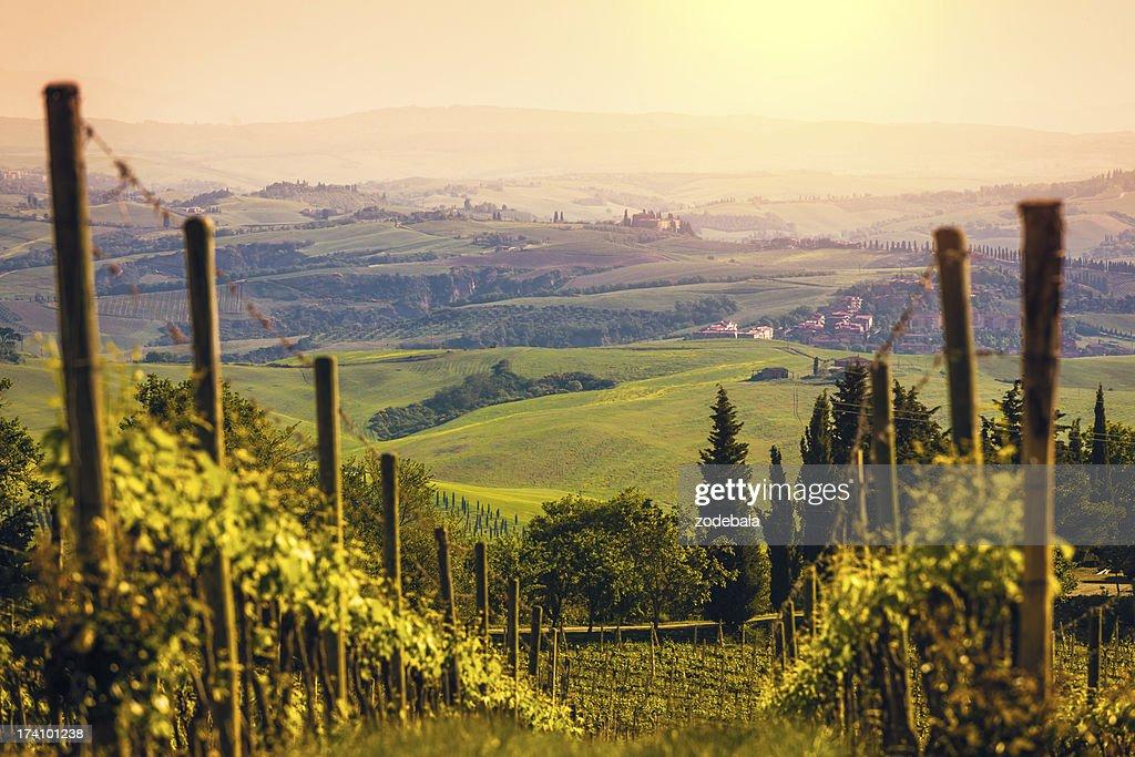 Vineyards in Italy at Sunset, Chianti Region : Stock Photo