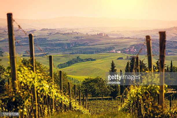 vineyards in italy at sunset, chianti region - siena italy stock photos and pictures