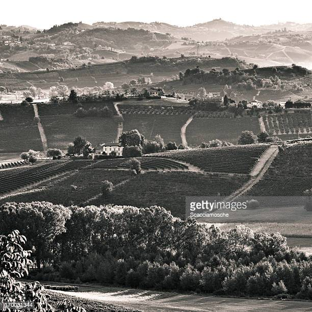 vineyards in italy - piedmont italy stock photos and pictures