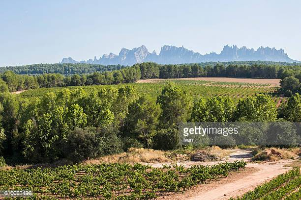 vineyards in la rioja, alava, rioja and basque country, spain, europe. - haro photos et images de collection