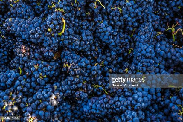 vineyards in la rioja spain - grape stock pictures, royalty-free photos & images