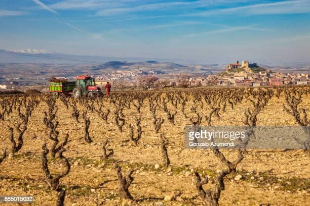 vineyards in la rioja spain - haro photos et images de collection