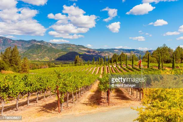 vineyards in napa valley california - napa valley stock pictures, royalty-free photos & images