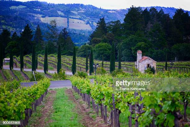 vineyards in napa valley in california - napa california stock photos and pictures