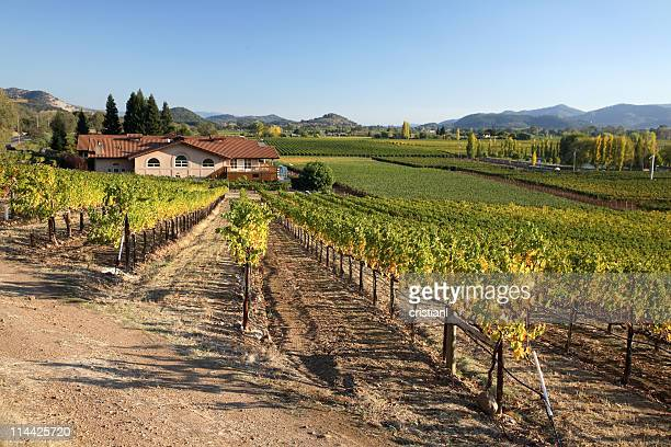 vineyards in napa valley - napa california stock photos and pictures