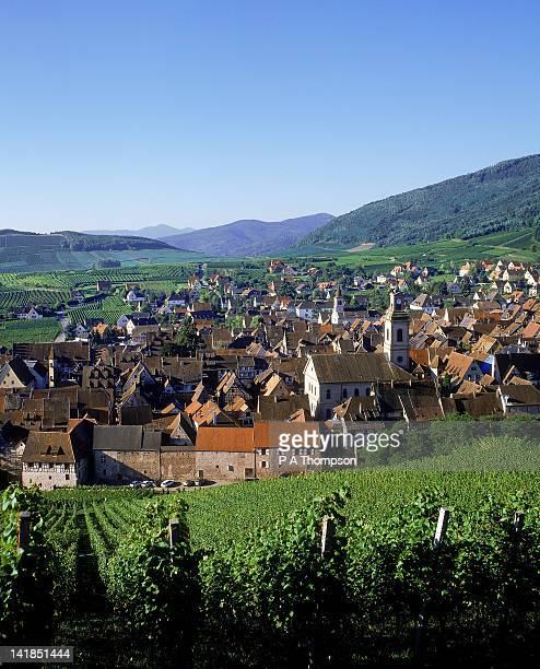 vineyards in riquewihr, haut-rhin, alsace, france - haut rhin stock pictures, royalty-free photos & images