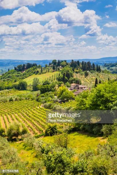 vineyards in san gimignano, tuscany, italy - サンジミニャーノ ストックフォトと画像