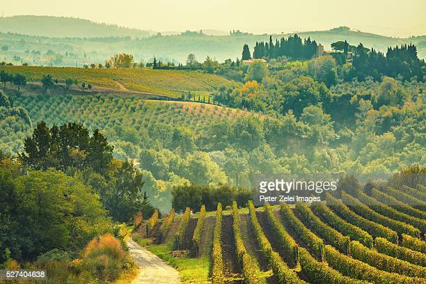 vineyards in the chianti region, tuscany, italy - chianti region stock photos and pictures