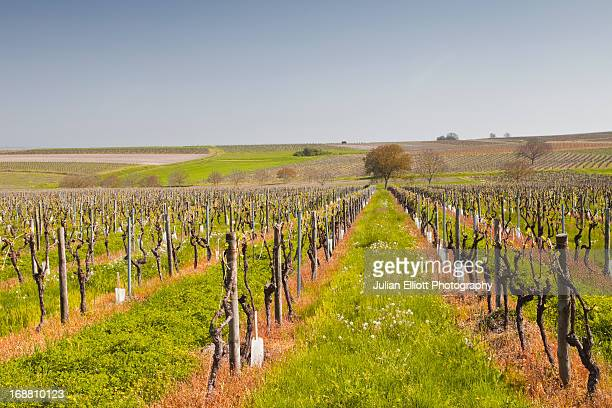 Vineyards in the Cognac area of France.