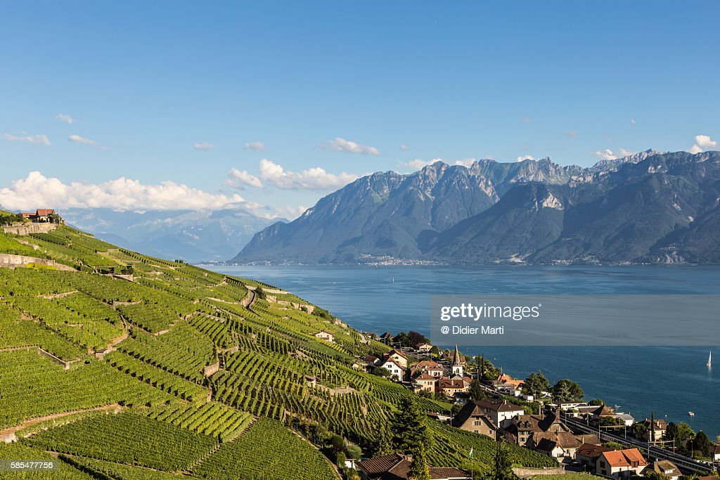 Vineyards in the famous Lavaux aera by lake Geneva in Switzerland : Stock Photo