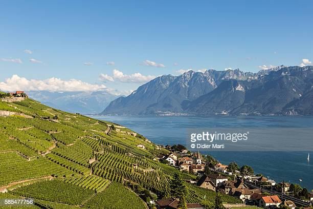vineyards in the famous lavaux aera by lake geneva in switzerland - lausanne stock pictures, royalty-free photos & images