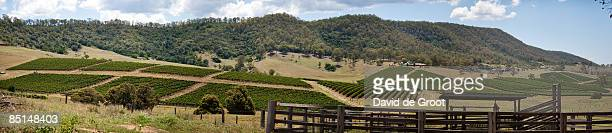 Vineyards in the Hunter Valley