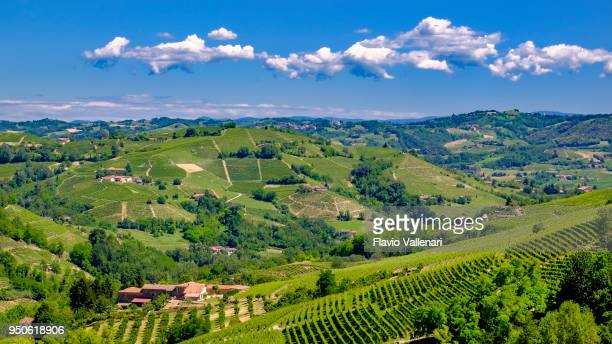 vineyards in the langhe, a hilly area mostly based on vine cultivation and well known for the production of barolo wine. piedmont, italy - collina foto e immagini stock