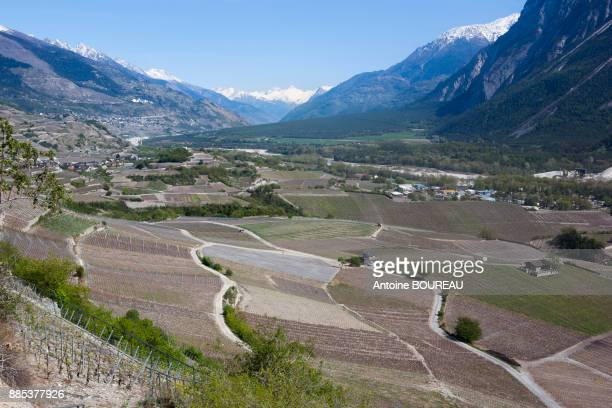 Vineyards in the Rhone valley and snow-capped peaks in Sion, Valais, Switzerland