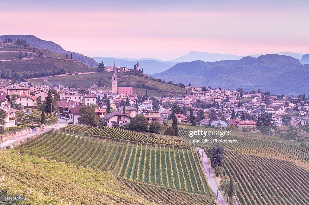 Vineyards in the village of Termeno, Italy. : Stock Photo