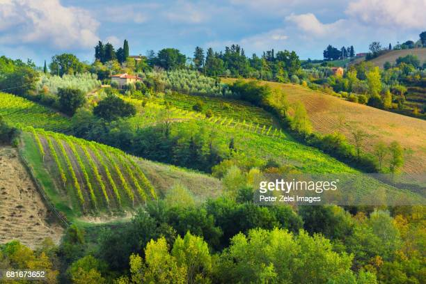 Vineyards in Tuscany in the surroundings of San Gimignano