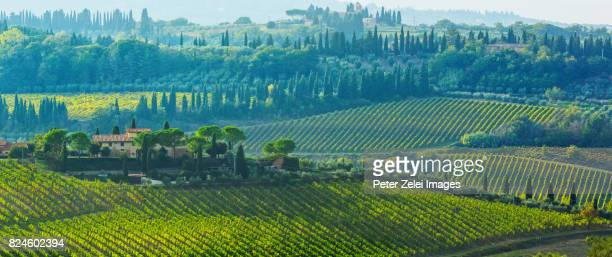 vineyards in tuscany, italy - italian cypress stock photos and pictures