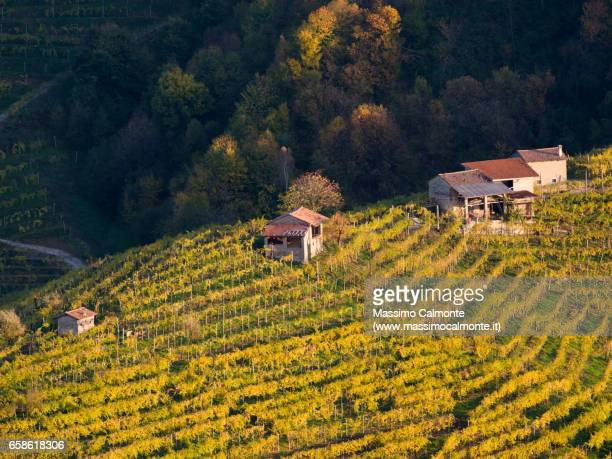 vineyards in valdobbiadene, land of prosecco wine - prosecco stock pictures, royalty-free photos & images