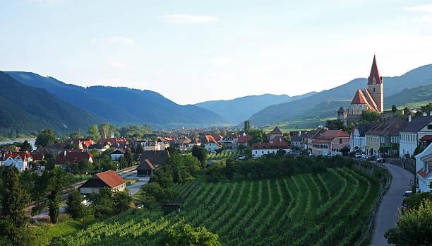 Vineyards In Weissenkirchen On The Danube Wall Art
