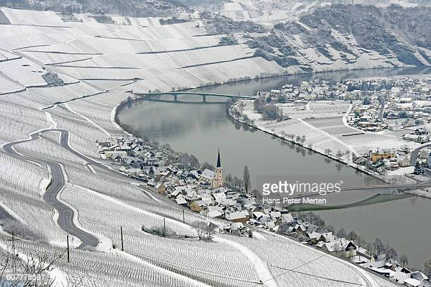 vineyards in winter, Piesport, Moselle Valley