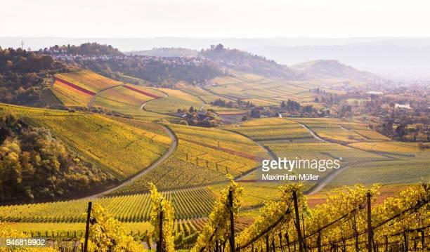 vineyards, kappelberg, fellbach, germany - weinberg stock-fotos und bilder