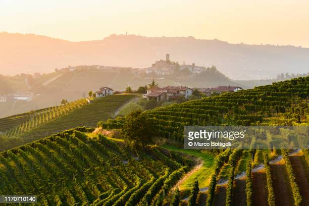 vineyards landscape at sunset, langhe-roero wine region, italy. unesco site - piedmont italy stock pictures, royalty-free photos & images