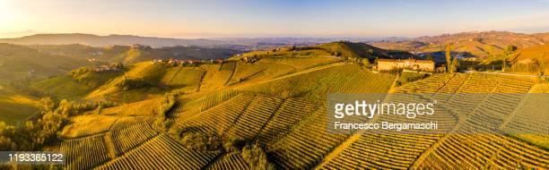 vineyards landscape at sunset. - italia ストックフォトと画像